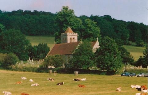 FC158-17 Cattle in Hughenden Park June 1999